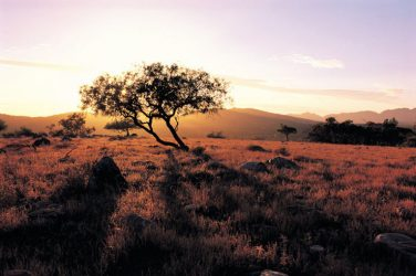 FLINDERS RANGES SOUTHERN 1 Day 4WD Eco Safari – Private Charter